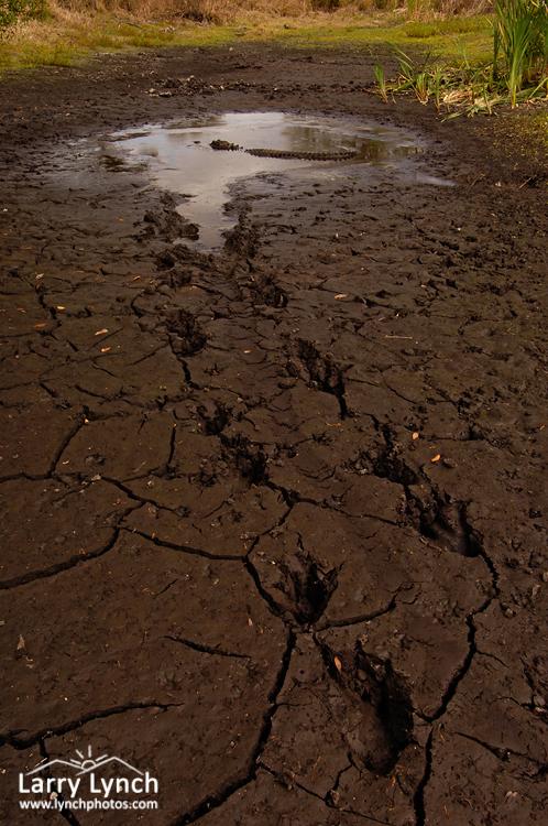 Surviving the Drought, Myakka River SP, FL