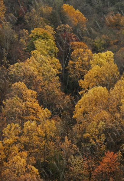 Backlit Fall Color