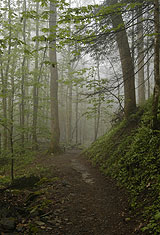 Chimney Tops Nature Trail In Mist