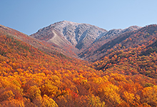Fall Color on Mt Leconte, Smoky Mountains