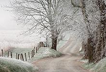 Frost Covered Trees, Hyatt Lane, Cades Cove TN