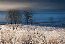 Frost in Cades Cove, Smoky Mountains
