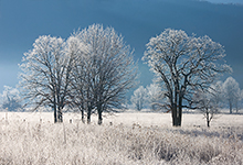 Frosted Trees, Cades Cove #2