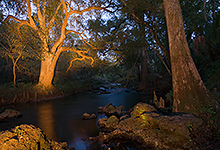 Hillsborough River LML0046-1