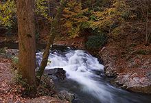 Laurel Creek, Smoky Mountains TN 0002
