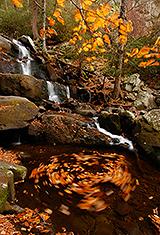 Laurel Falls (Lower Section)