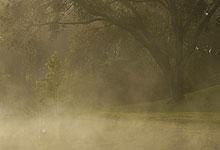 Mist On Bog