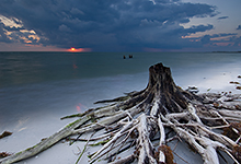 Old Snags, Ft Desoto Park, Florida - LML9801