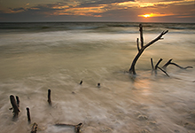 Old Snags, Honeymoon Island, Florida LML9876