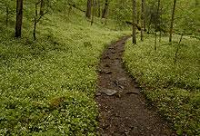 Porters Creek Trail In April
