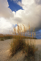 Sea Oats And Storm Clouds