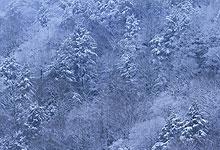Snow On Mountain Ridge