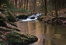 Stream in Great Smoky Mountains National Park, TN