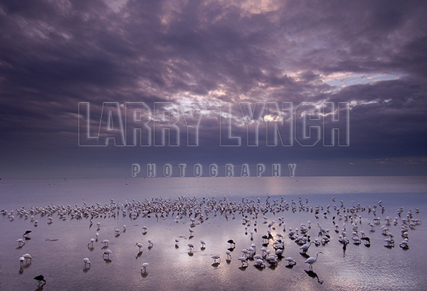 Wading Birds and Storm Clouds