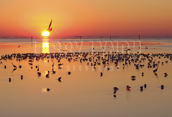 Wading Birds at Sunrise