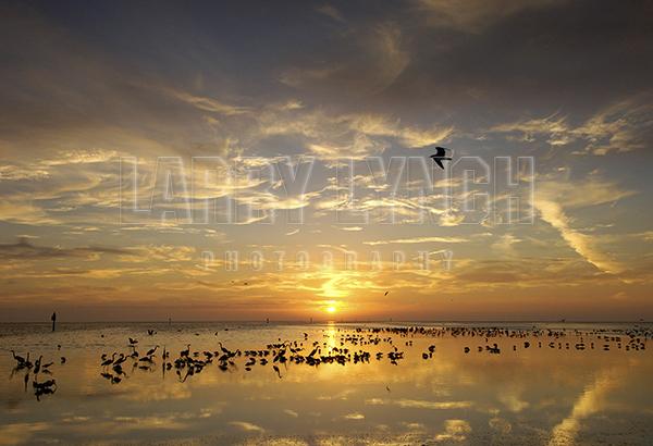 Wading Birds Feeding at Sunrise