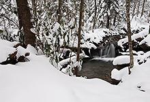 Winter on Leconte Creek, Smoky Mountains